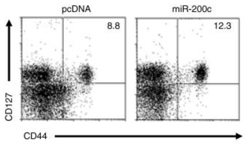 Fig.1 Cytolytic function of CD8+T cells in HBV-persistent mice by miR-200c over-expression.