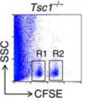 Fig.2 Tsc1 deficiency impairs NK cell-mediated immunosurveillance.