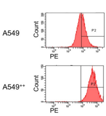 Fig.2 Flow cytometry was performed to evaluate the distribution level of integrin α2β1 on the tumor surface.