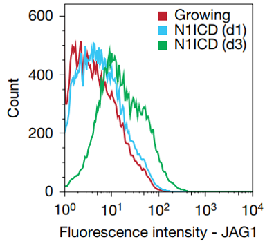 Fig. 1 Time series analysis of JAG1 expression at the cell surface by flow cytometry after doxycycline induction in TRE-N1ICD cells.