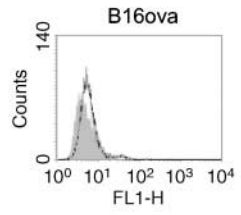 Fig.1 JAM-1 expression was assessed by flow cytometry.