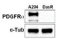 Fig.2 Molecular characterization of parental and kinase inhibitor resistant counterparts.