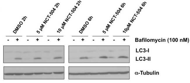 Fig.3 Representative Western blots showing the levels of LC3-I, LC3-II and Tubulin