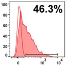 Fig.1 Representative histograms of the flow cytometry data of CD14⁺ PD-L1⁺ monocytes for co-cultures with either Tdx.