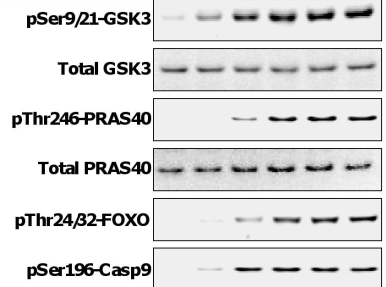 Fig.1 Effect of GSK2141795 on AKT signaling and growth inhibition in human cancer cell lines.