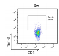 Fig.2 Increased Tim-3 expression on CD4 and CD8 T cells in S. japonicum-infected mice.